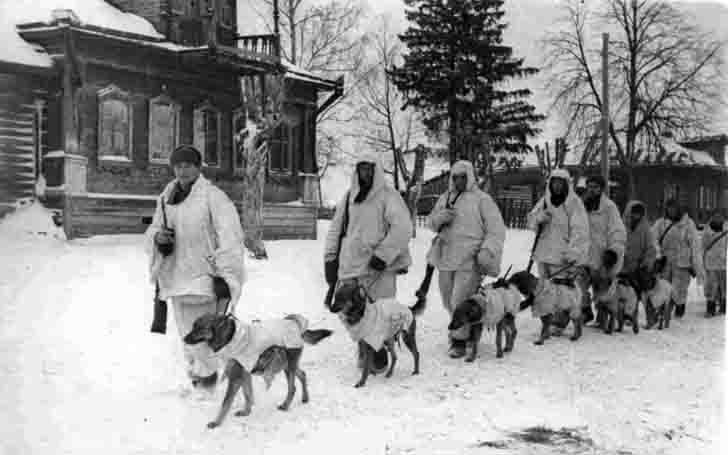 Soviet soldiers walk their dogs tank destroyers