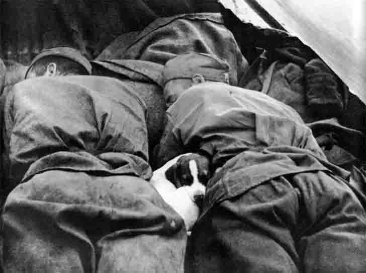 Sleeping the Red Army's soldiers and a dog