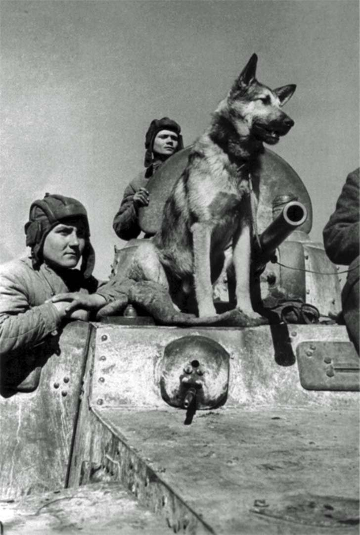 Shepherd Djulbars - crew member from BA-10 armored car
