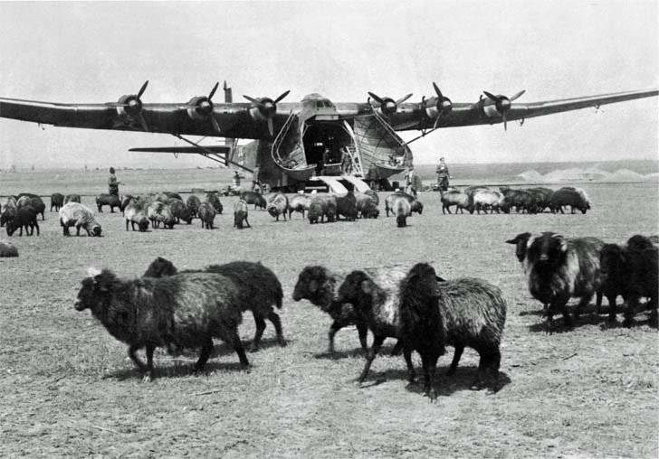 Messerschmitt Me.323 «Gigant» among the grazing sheep