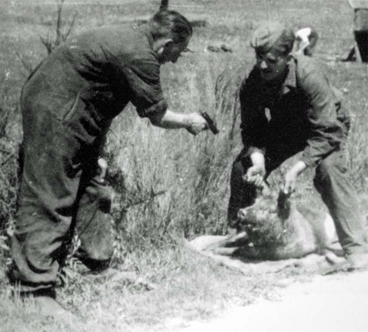 German soldiers killing a pig from Mauser pistol