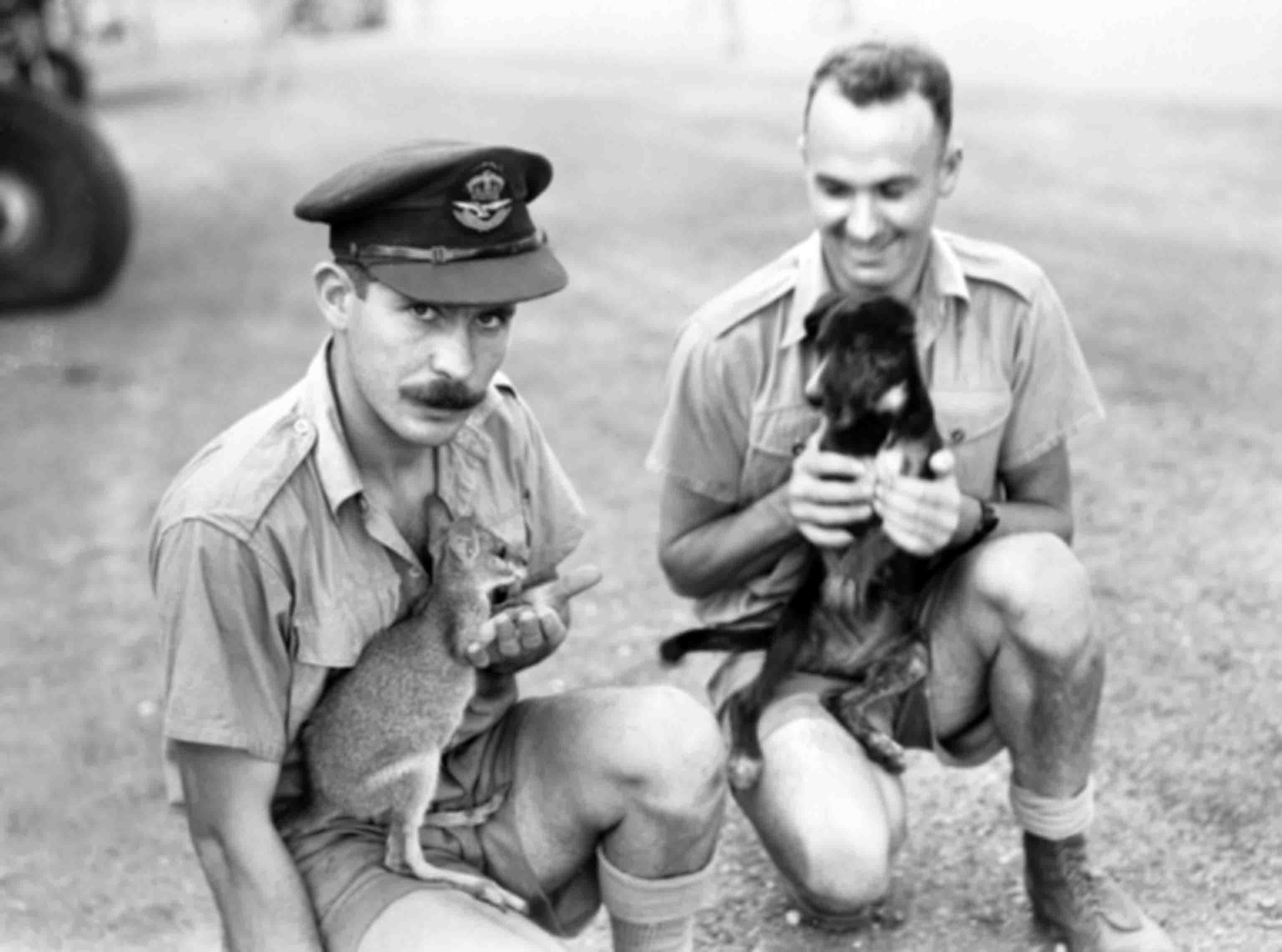 Australian military pilot