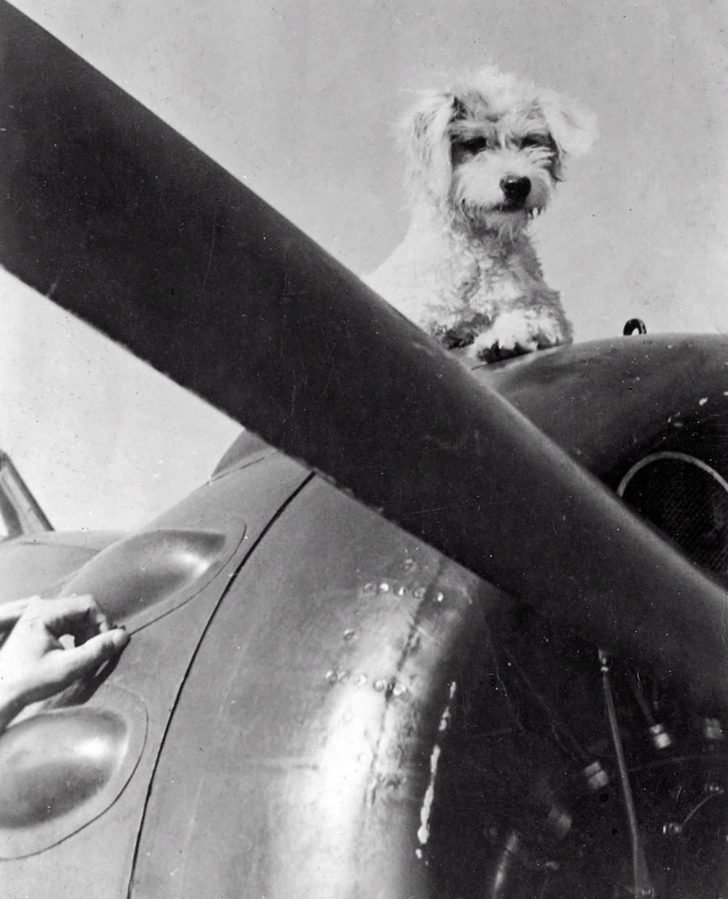 The dog-mascot