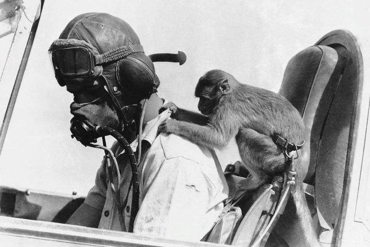 Sergeant Alan Cameron, Buzz Monkey