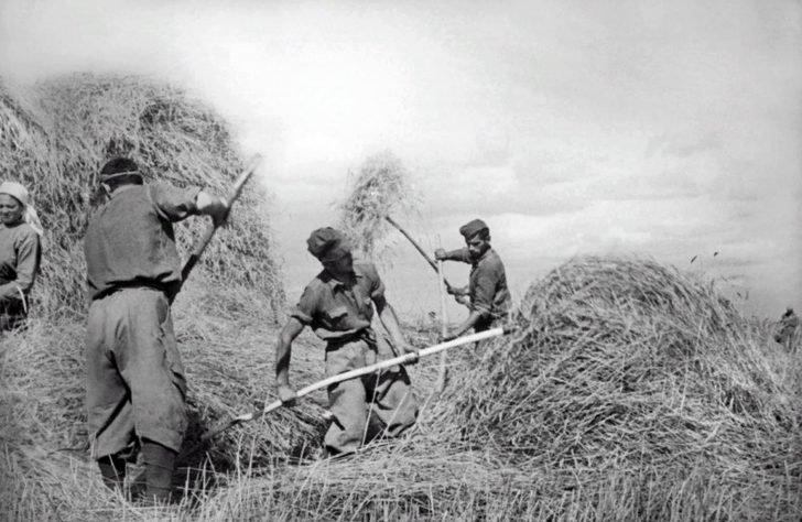 Captured Italian soldiers